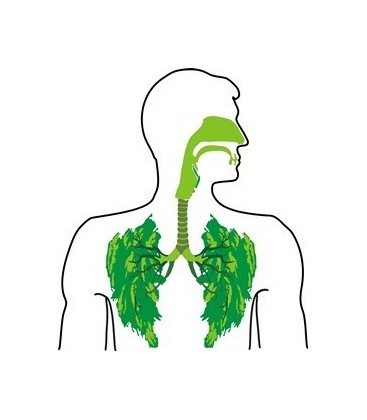 Respiratory system diseases