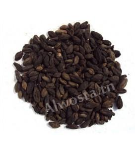 Myrobalan chébule noir