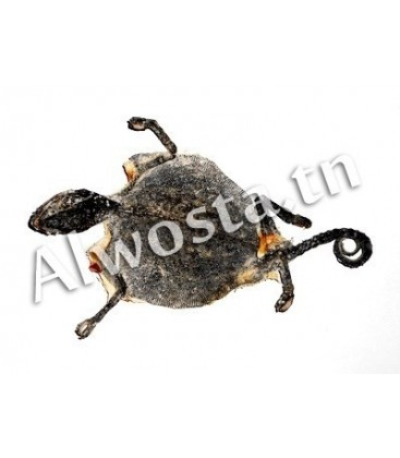 Chameleon leather