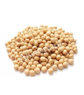 Soybean (Soya bean, Glycine max)