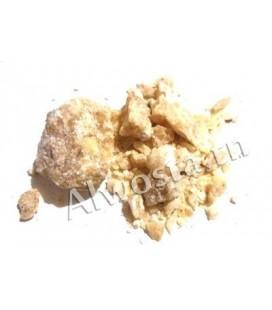 Styrax benzoin blanc
