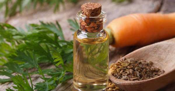 Benefits of carrot seeds oil