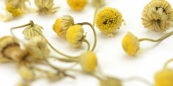 chamomile benefits for health