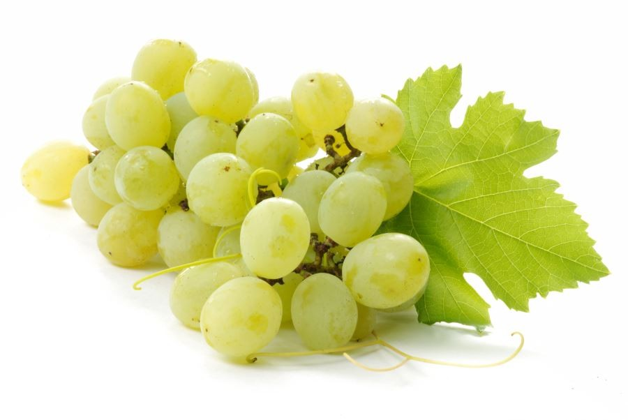 Medicinal benefits of green grapes