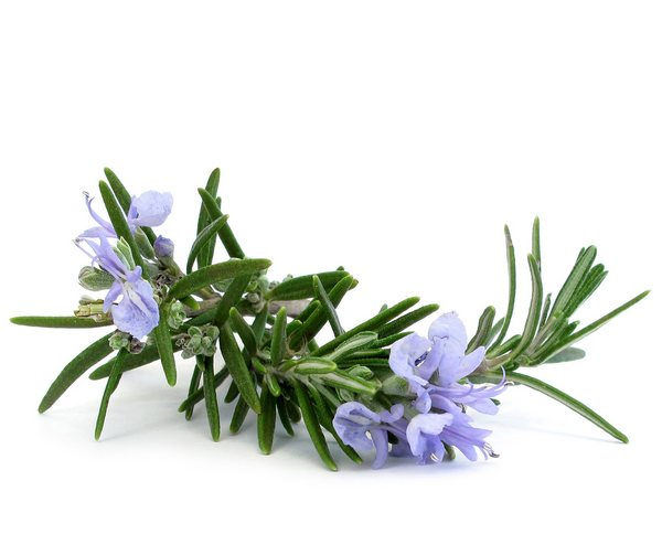 Dosage of rosemary