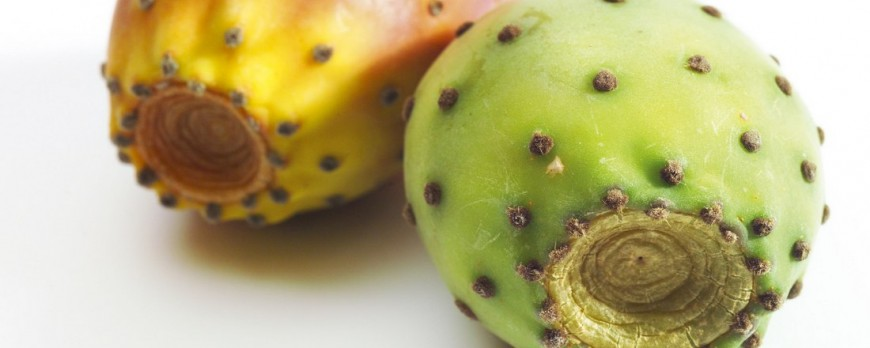 Prickly Pear Cactus: benefits, uses, tips and side effects