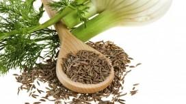 Fenouil et ses graines: bienfaits, méfaits, posologie, vertus et effets secondaires