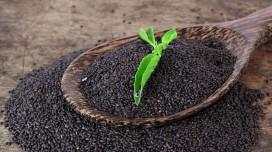 Graines de Basilic, dossier complet: Bienfaits, propriétés et effets secondaires