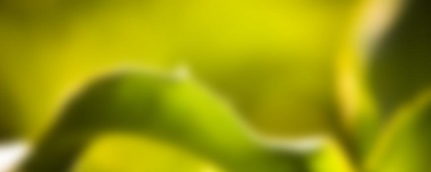 Bienfaits de l'huile de Lentisque (Gadhoum)