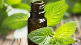 Mint Oil: Benefits and Virtues