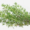 Thyme: 25 proven health benefits and virtues