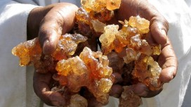 Gum arabic for slimming