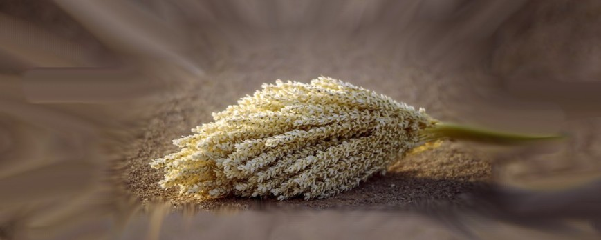 Palm pollen: Properties and proven health benefits